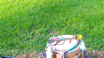 untamed heart drum rollicks in the yard