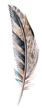 illustration of a feather