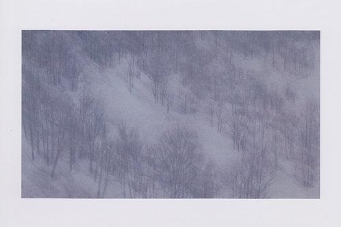 絵葉書『冬の林』