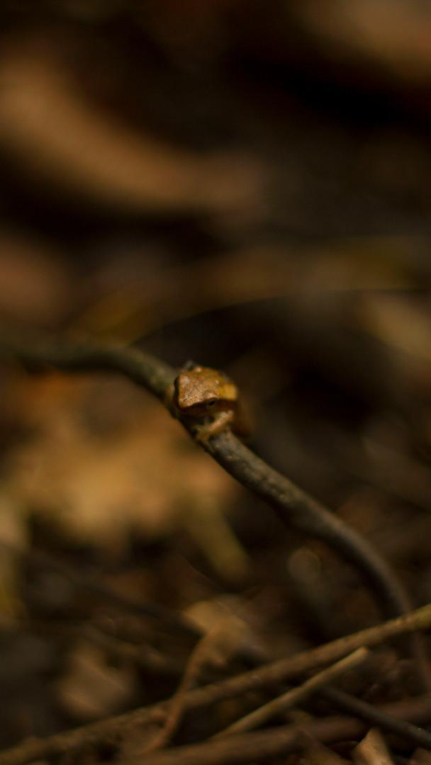 Frog Amazon Tourism