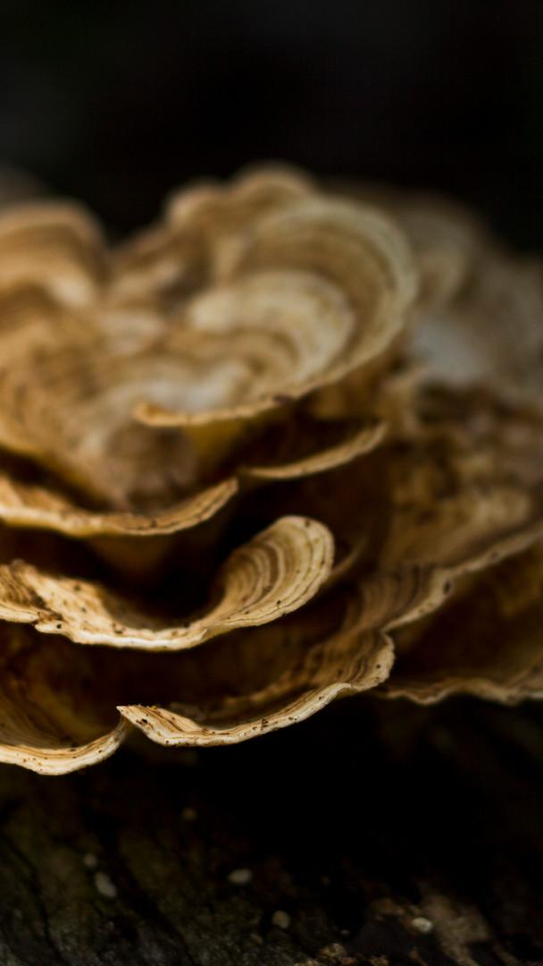 Fungi Amazon Tourism