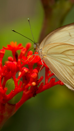 Butterfly Amazon sustainable tourism