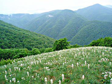 """Красота дикой природы. Гора """"Лысая"""""""