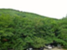 Гостевой дом Лесной расположен на море и в лесу одновременно.