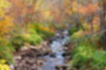 11223310-scenic-autumn-stream-through-co