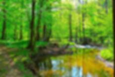 17799406-beautiful-mountain-stream-in-sp