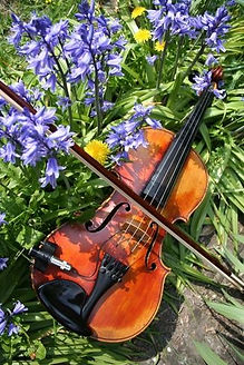 Spring fiddle.jpeg
