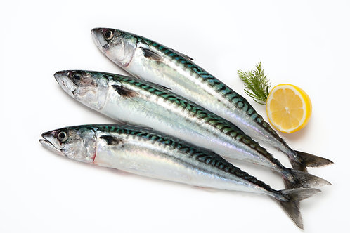 Mackerel Whole