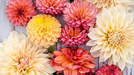 Manual técnico das 70 flores e folhagens