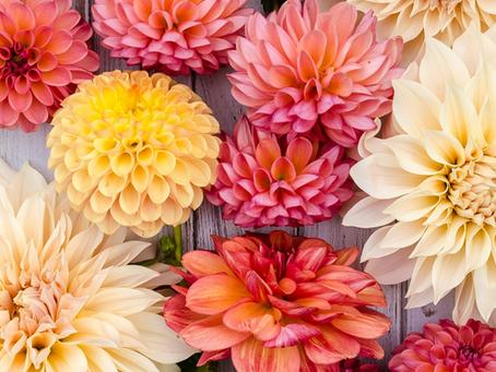 O que é importante saber para ter flores e folhagens de corte mais bonitas, saudáveis e duráveis