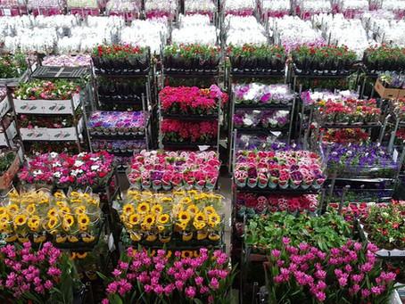Como o mercado de flores fechou o ano de 2020 e quais são as oportunidades de negócios em 2021