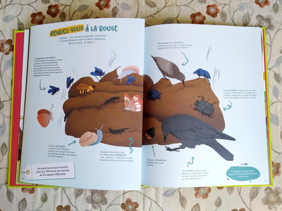 Crottes interior page