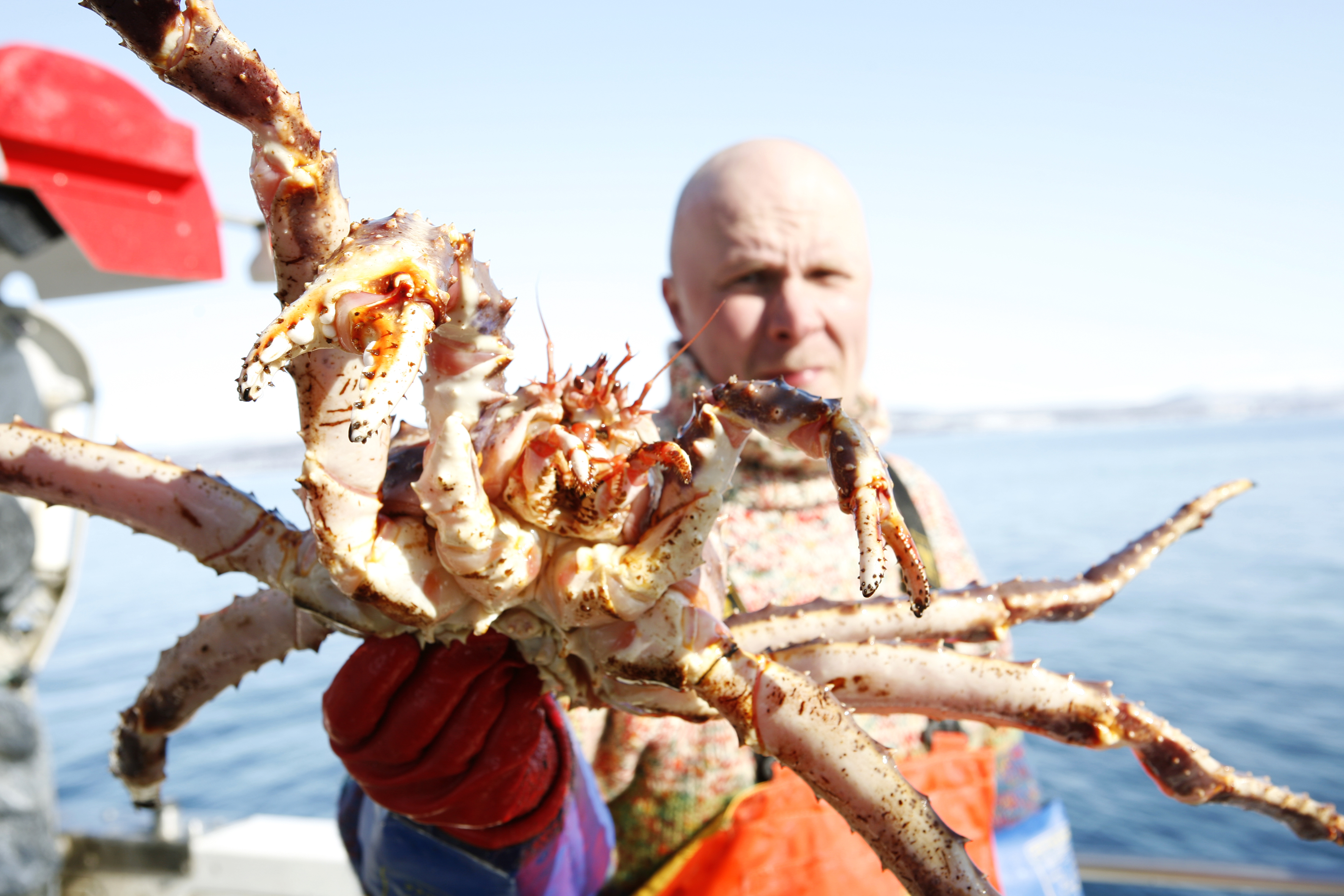 King Crab safarit