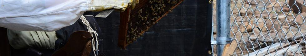 beekeepingcrop.jpg