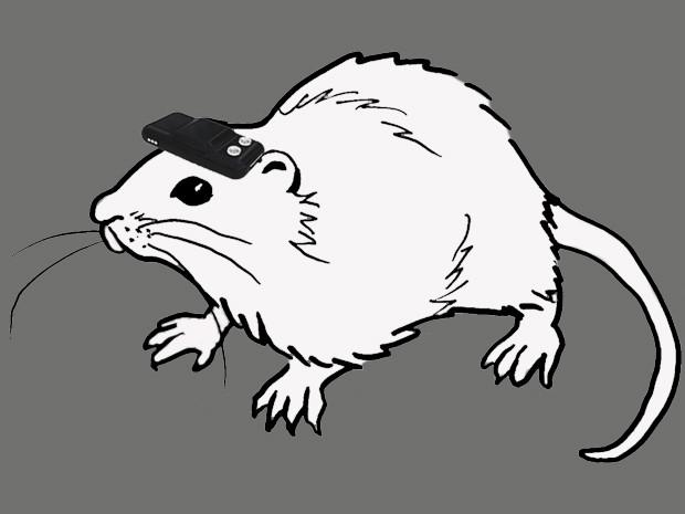 RatCompass.jpg