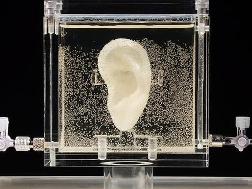 Recrean una copia viva la oreja de van Gogh