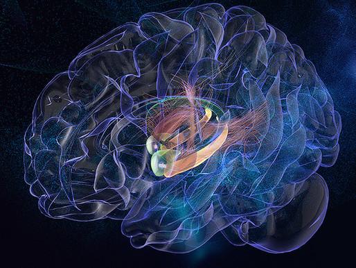 Estimular el centro emocional del cerebro mejora la memoria