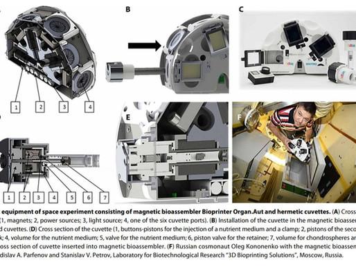 Astronautas hacen crecer cartílago humano en el espacio