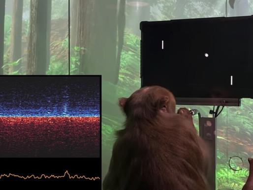 Primera demostración de Neuralink, el dispositivo de interfaz persona-computador de Elon Musk