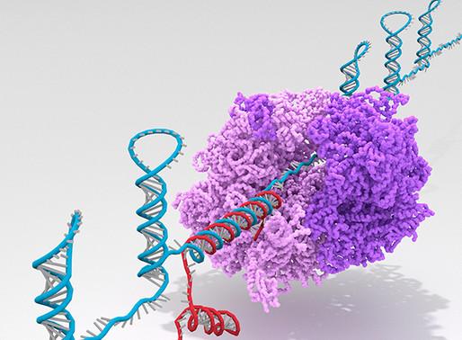 Ribocomputer, el ordenador biológico más complejo creado hasta la fecha