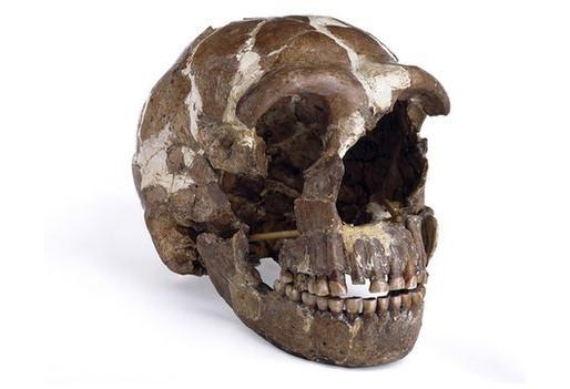 Genes Neanderthales que saltaron a nuestro genoma nos hacen propensos a ciertas enfermedades