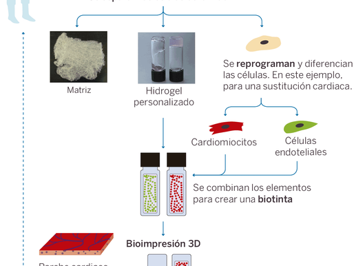Imprimen en 3D un corazón hecho con tejido humano