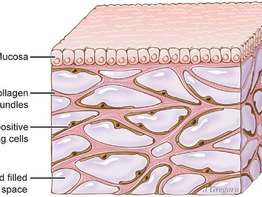 Descubren un nuevo órgano del cuerpo humano, el intersticio, gracias a un nuevo dispositivo biomédic
