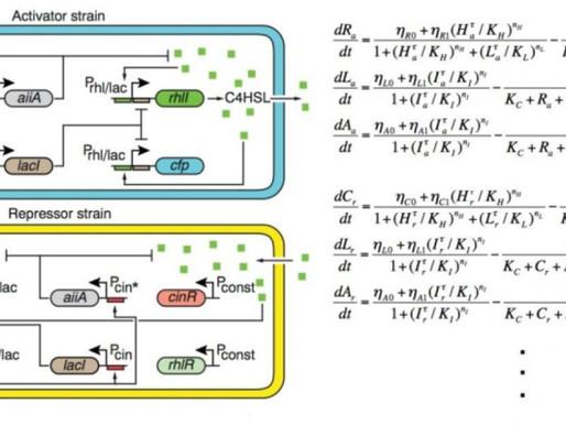 Modelando matemáticamente los ritmos de la vida
