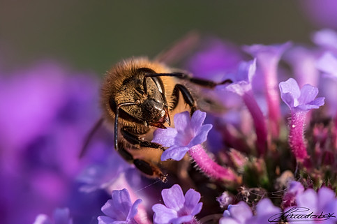 Portrait of a bee