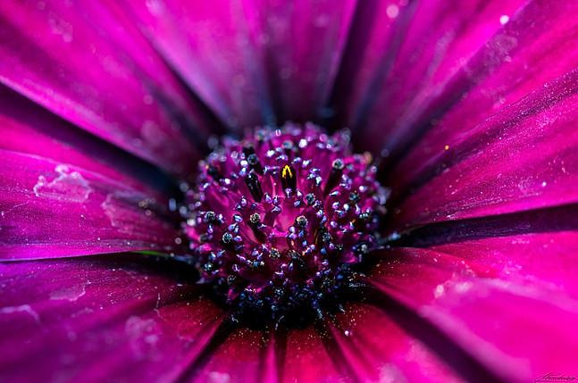 Purple crystal flower