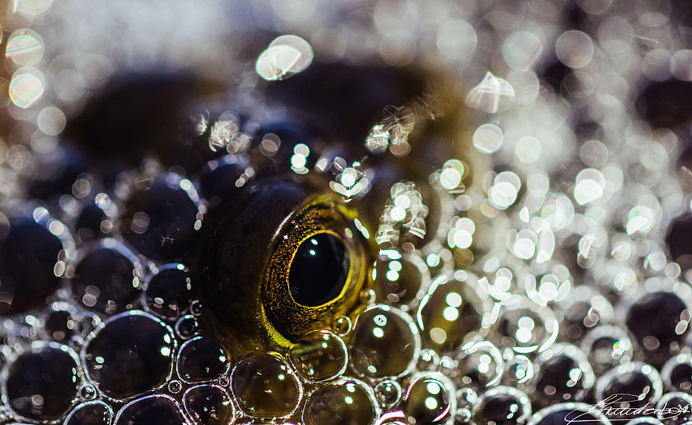 Frog emerging from a sea of bubbles