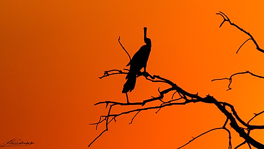 Vulture shadow in a bloody sky