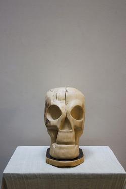 Crâne de hêtre
