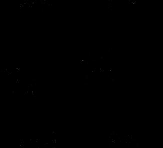 zèbres