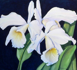 White Cattleya Orchids III
