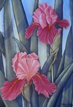 Bearded Irises in peach