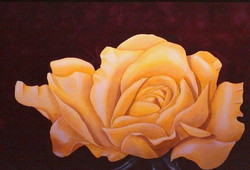 midas touch - yellow rose