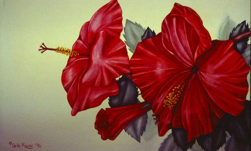hibiscus in scarlet