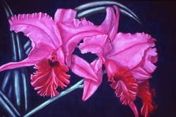 pink cattleyas