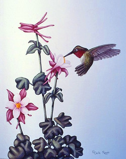 broadtailed hummingbird with columbines