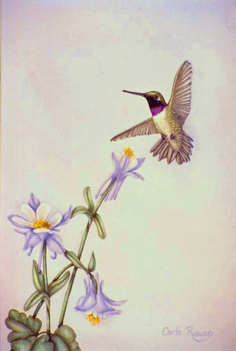 blackchinned hummer and columbines