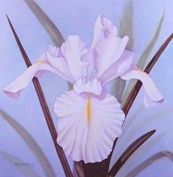 white iris I