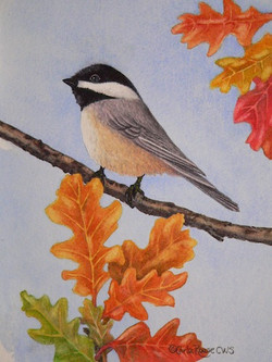 chickadee in oaks