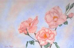 wild roses for mom