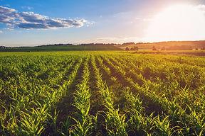 revolutionary soil microbiome