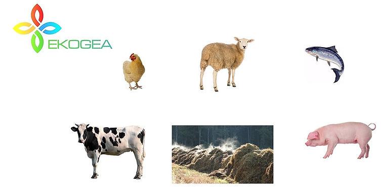 animal microbiome health