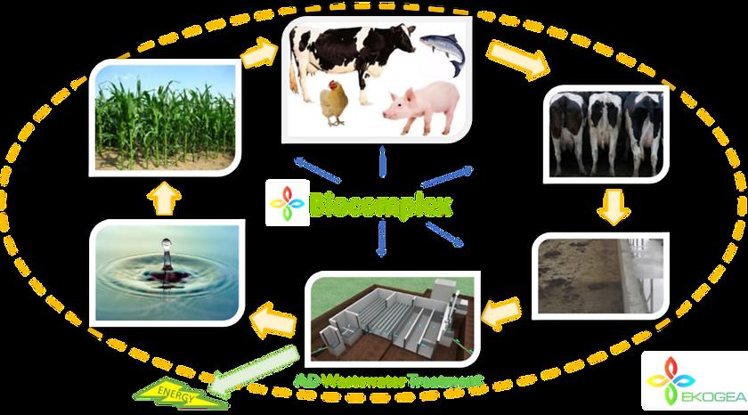 Closed loop farm solution