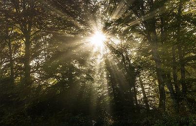 autumn-1755346_640.jpg