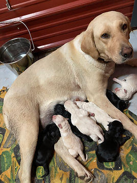 Sugar with puppies 5-21.JPG