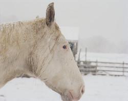 white horse4000